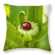 Lady Bug In The Garden Throw Pillow