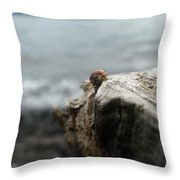 Lady Bug Lake Throw Pillow