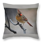 Lady Cardinal Throw Pillow by Skip Willits