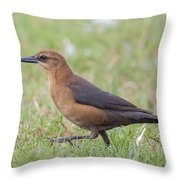 Lady Grackle On A Walk Throw Pillow