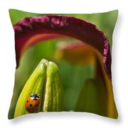 Ladybird Beetle Cuddled By Lily Blossom 4 Throw Pillow