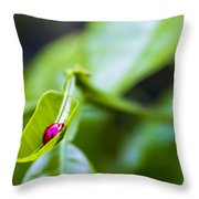 Ladybug Cup Throw Pillow by Marvin Spates
