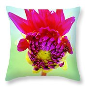 Ladybug Home Throw Pillow