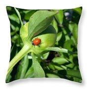 Ladybug Ladybug  Throw Pillow