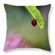 Ladybug With Mimosa Throw Pillow