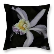 Laeliocattleya Jacki Stidham Throw Pillow