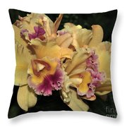 Laeliocattleya Lydia Hubbell Throw Pillow