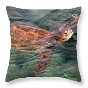 Lager Head Turtle 001 Throw Pillow