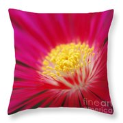 Lampranthus Abstract Throw Pillow