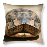 Land Turtle Hiding In Its Shell  Throw Pillow