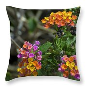 Lantana Blooms Throw Pillow