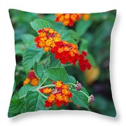 Lantana Delight Throw Pillow
