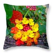 Lantana Flowers 2 Throw Pillow