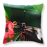 Laparus Doris Butterfly Throw Pillow