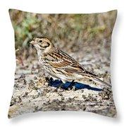 Lapland Longspur Throw Pillow