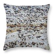 Large Flocks Of Migratory Birds Stop Throw Pillow