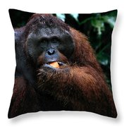 Large Male Orangutan Borneo Throw Pillow