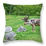 Large Reindeer Molting In Summer Pasture Art Prints Throw Pillow
