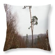 Large Trees In The Nature Park In Winter Throw Pillow