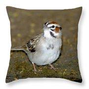 Lark Sparrow Throw Pillow
