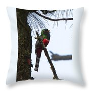 Las Trancas Mountain Trogon Throw Pillow