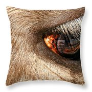 Lashes Throw Pillow by Diana Angstadt