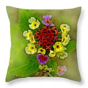 Last Blooms Number Four Throw Pillow