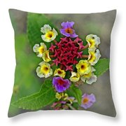 Last Blooms Number Two Throw Pillow
