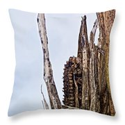 Last Of The Corn Throw Pillow
