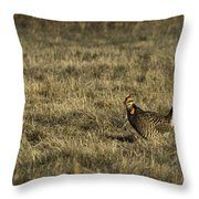 Last Prairie Chicken On The Booming Grounds  Throw Pillow by Thomas Young
