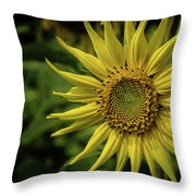 Last Rays Of Summer Throw Pillow