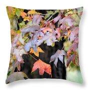 Late Autumn Maples Throw Pillow