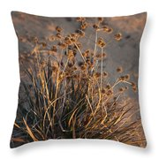 Late Day Color Throw Pillow