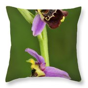 Late Spider Orchid Switzerland Throw Pillow