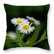 Late Summer Bloom Throw Pillow
