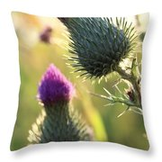 Late Summer Thistle - 2 Throw Pillow
