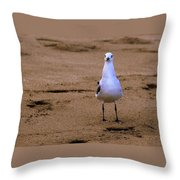 Laughing Gull 004 Throw Pillow