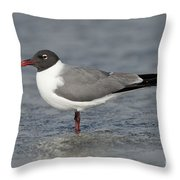 Laughing Gull Throw Pillow