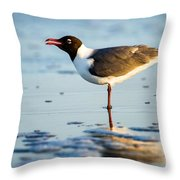 Laughing Gull On The Beach At Fort Clinch State Park Florida  Throw Pillow