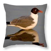 Laughing Gull Larus Atricilla Throw Pillow