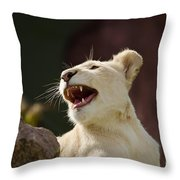 Laughing Lioness Throw Pillow
