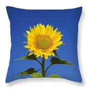 Laval, Quebec, Canada Sunflower Throw Pillow