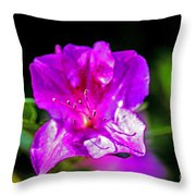 Lavendar Beauty Throw Pillow