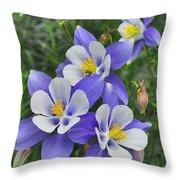 Lavender And White Star Flowers Throw Pillow