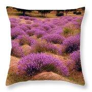 Lavender Fields 2 Throw Pillow