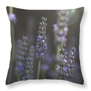 Lavender Flare. Throw Pillow