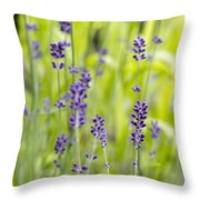 Lavender Flowers Background Throw Pillow