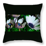 Lavender Frost African Daisy Throw Pillow