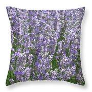 Lavender Hues Throw Pillow