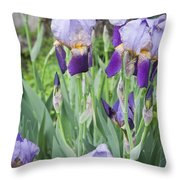 Lavender Iris Group Throw Pillow